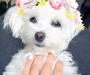 dog, filter, and flowers image