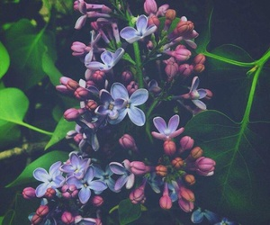 flowers, purple, and green image