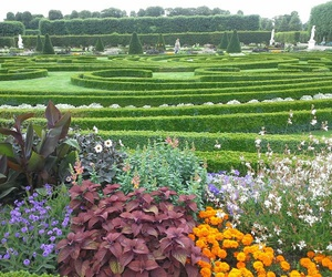 flowers, garden, and germany image