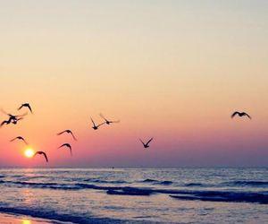 bird, beach, and sunset image
