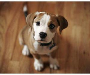 chiens, dog, and pets image