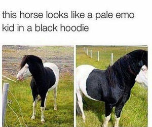 horse, funny, and emo image