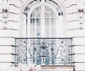 flowers, white, and paris image