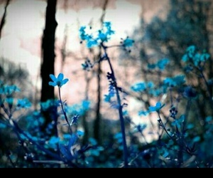 flowers, blue, and forest image
