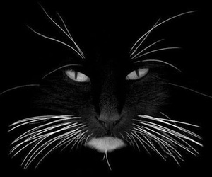 Animales and blanco y negro image
