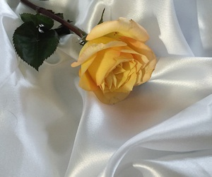rose, aesthetic, and yellow image