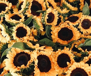 flowers, sunflowers, and jessica stein image