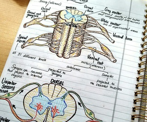 drawing, notes, and medecine image