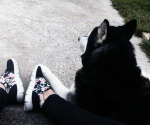 black, dog, and me image