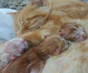 cat, amoor, and gatitos image