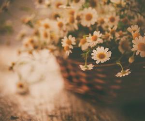 flores, flowers, and naturaleza image