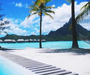fashion, palm tree, and paradise image