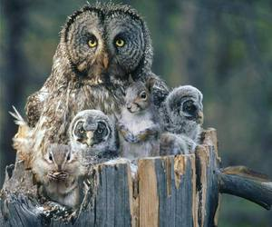 owl, bird, and nature image