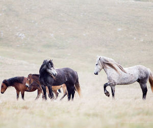animals, family, and horse image