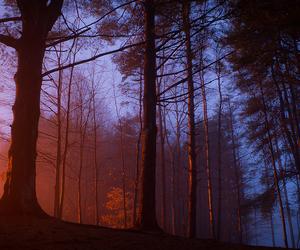 nature, sunrise, and woods image