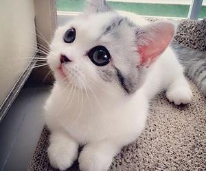 amazing, aww, and cat image