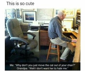 funny, cat, and grandpa image