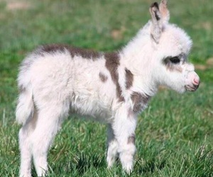 cute, animal, and donkey image