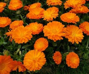 orange, flowers, and we heart it image