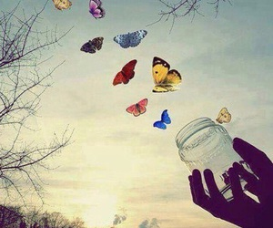 butterfly, freedom, and sky image
