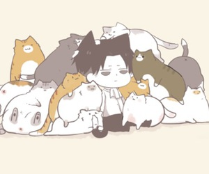 levi, cats, and anime image