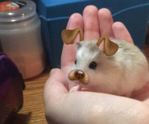 hamster, animal, and snapchat image