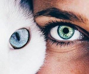 beautiful, cat, and girl image