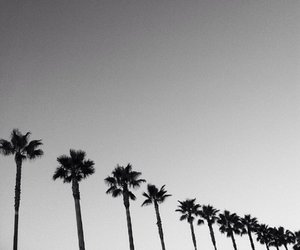 palm trees, black and white, and photography image