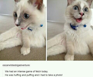 adorable, awesome, and cat image