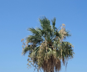 Greece and palm image