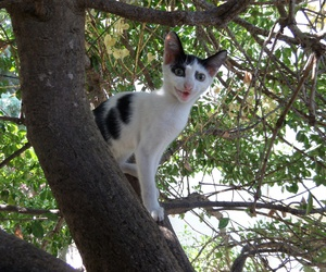 cat, tree, and thassos image