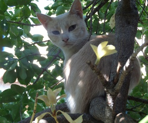 cat and Greece image