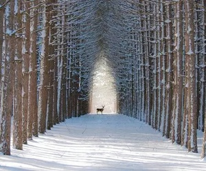 snow, winter, and cerf image