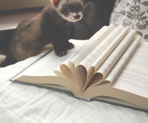 book, bed, and ferret image