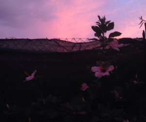 cielo, Easy, and pink image
