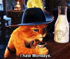monday, cat, and hate image