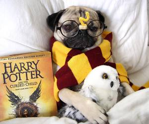 dog, harry potter, and book image