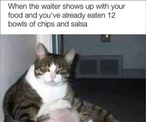 cat, funny, and mexican food image