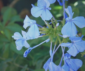 blue, blue flowers, and colors image