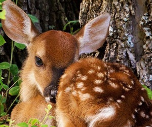 animal, deer, and fawn image