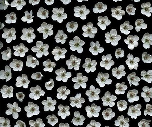 flowers, white, and background image