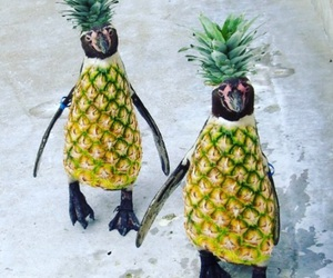 pineapple, pinguin, and snow image