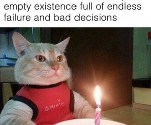 funny, birthday, and cat image