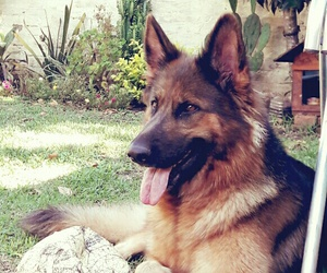dog, uruguay, and loba image