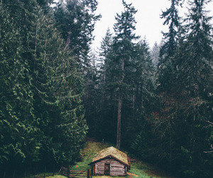 boho, green, and house image