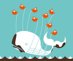 twitter, whale, and bird image