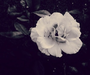 black, flower, and nature image