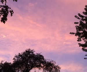 nature, pink, and purple image