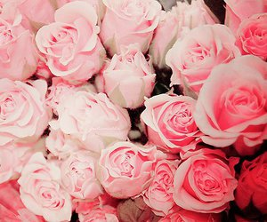 roses (: image