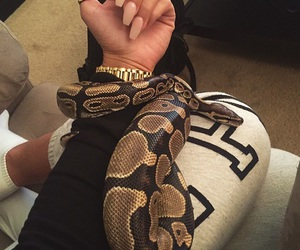 snake, nails, and animal image